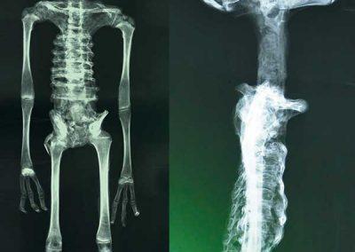 Alberto, X-ray