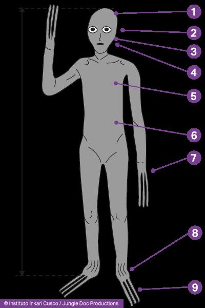 Corps d'un humanoïde hybride