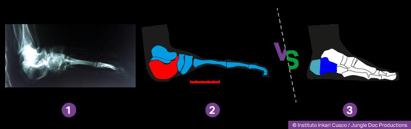 Pied d'un humanoïde hybride