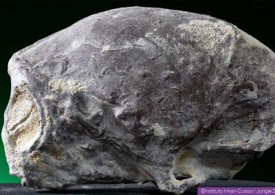 Mummified head