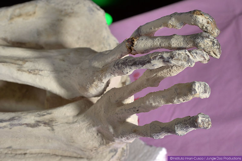 Tridactyl feet of Maria