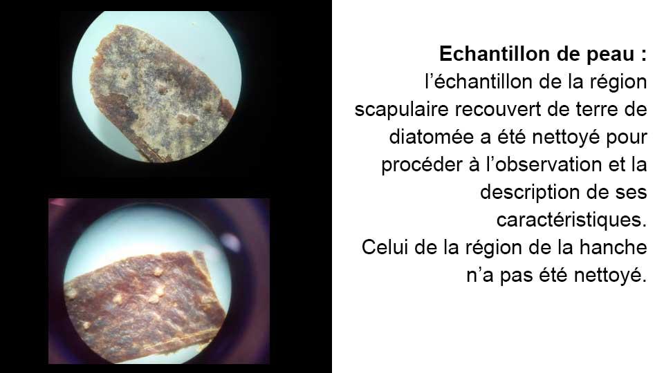 Peau recouverte de diatomée